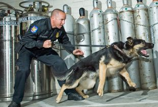 K9 with Handling Officer