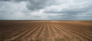 Lucy Lewis ~ Greenville McNeel PlantationBrazoria County Texas - 29°0'5″ N 95°32'6″ W