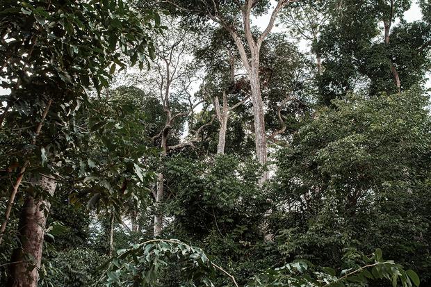 Freshness of Amazon