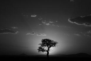 """""""Agaç"""" © Kamau Akabueze"""