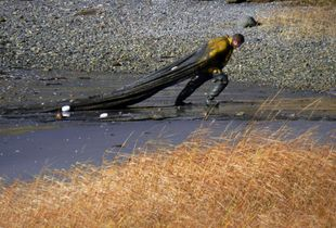 Hauling a net ashore, World's End Reservation, Hingham, MA