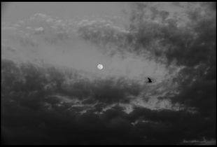 Yesterday'moon 08/04/2020