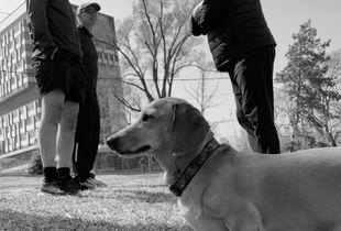 Dash hound waiting