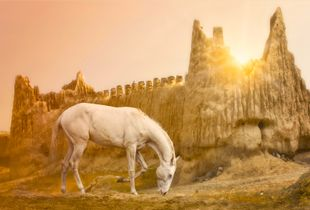 the Turkmen Racehorse: 6,000 years of history with man