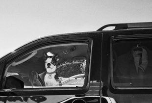 Black and white dog .