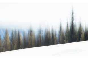 Snow Seizures
