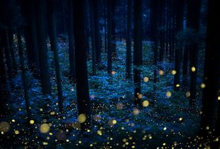 Deep forest fairies