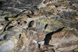 Crustacean face