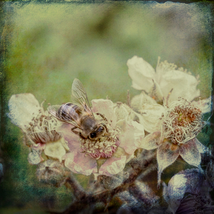 Insects art 1