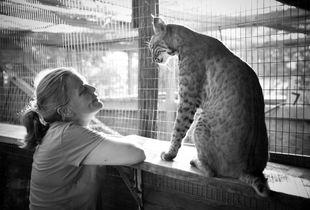 Bobcat Rescue - Engagement