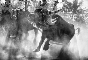 The Buffalo Race