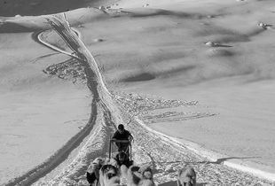 Sled dogs in East Greenland - glacier travel