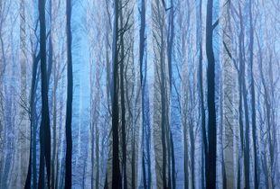 Enchanting Woods I