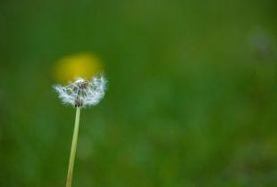 Sun-Moon flower.