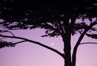 Moon A Rising