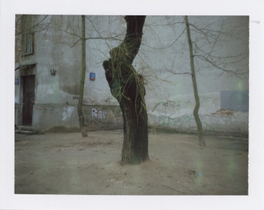 From the series Quiet Witnesses