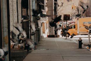 New York Scene 2008