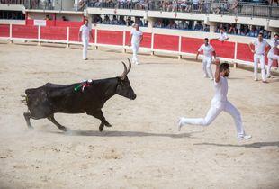 Course Camarguaise, traditional no-kill bullfight.