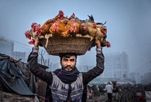 A man who sells chickens