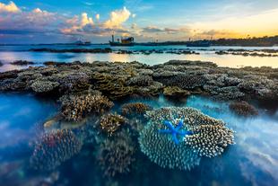 Flower garden of the sea