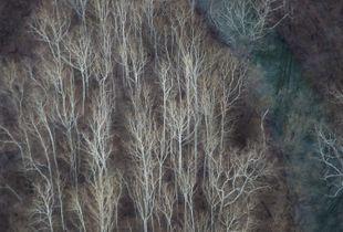 Virginia Aerials [1]