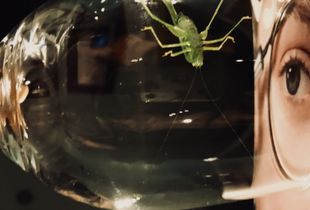 Eye to eye with a cricket