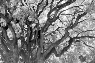 Kids in Tree, Turino