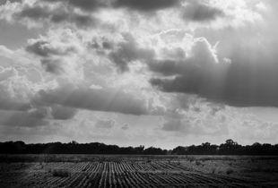 Godlight on the fields, Mississippi