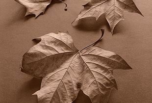 composition in sepia