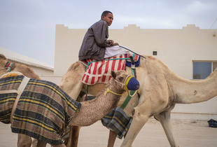 The Camel Racetrack