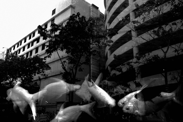 fishes in dream