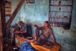 Fishermen and birds