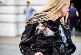 Taking a cat for a walk in Regent Street