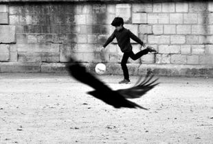 The Boy and the Crow.