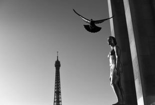 Free To Soar Amongst All The City of Lights Has To Offer