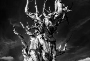Methuselah's Torments