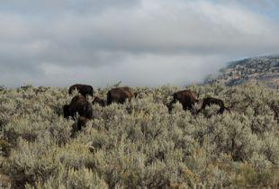 Scenic Spot, Yellowstone