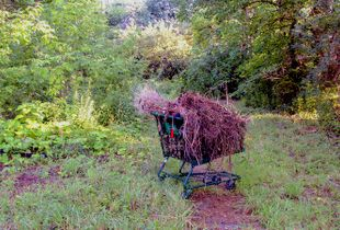 Food Basic Shopping Cart