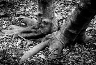 Tree Foot