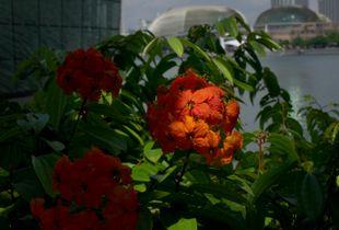 (sun) flower
