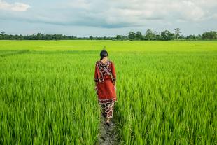 INDIA: THE SLAVES OF TEA