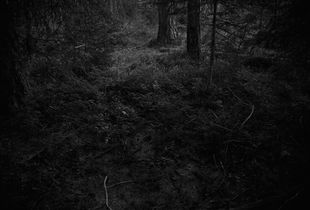 """Entry. From the series """"The Forest"""" © Ken Rosenthal"""