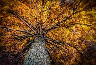 Alien Tick Tree