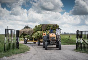 Tobacco Farming in Zimbabwe