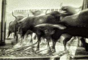 San Fermin bull-run 2015