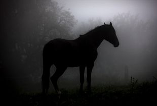 """""""Lonely Horse"""""""
