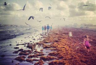Seagulls and seaweed