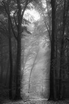 MOODS - WALKING IN THE FOG