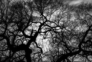 Diablo Tree