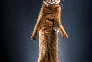 STANDING CATS - CALI